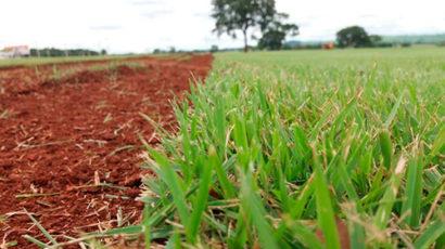 produção grama esmeralda melhor preço